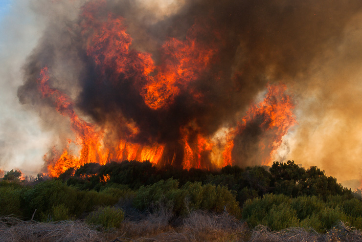 PIC_20070130_fynbos fire with intense heat
