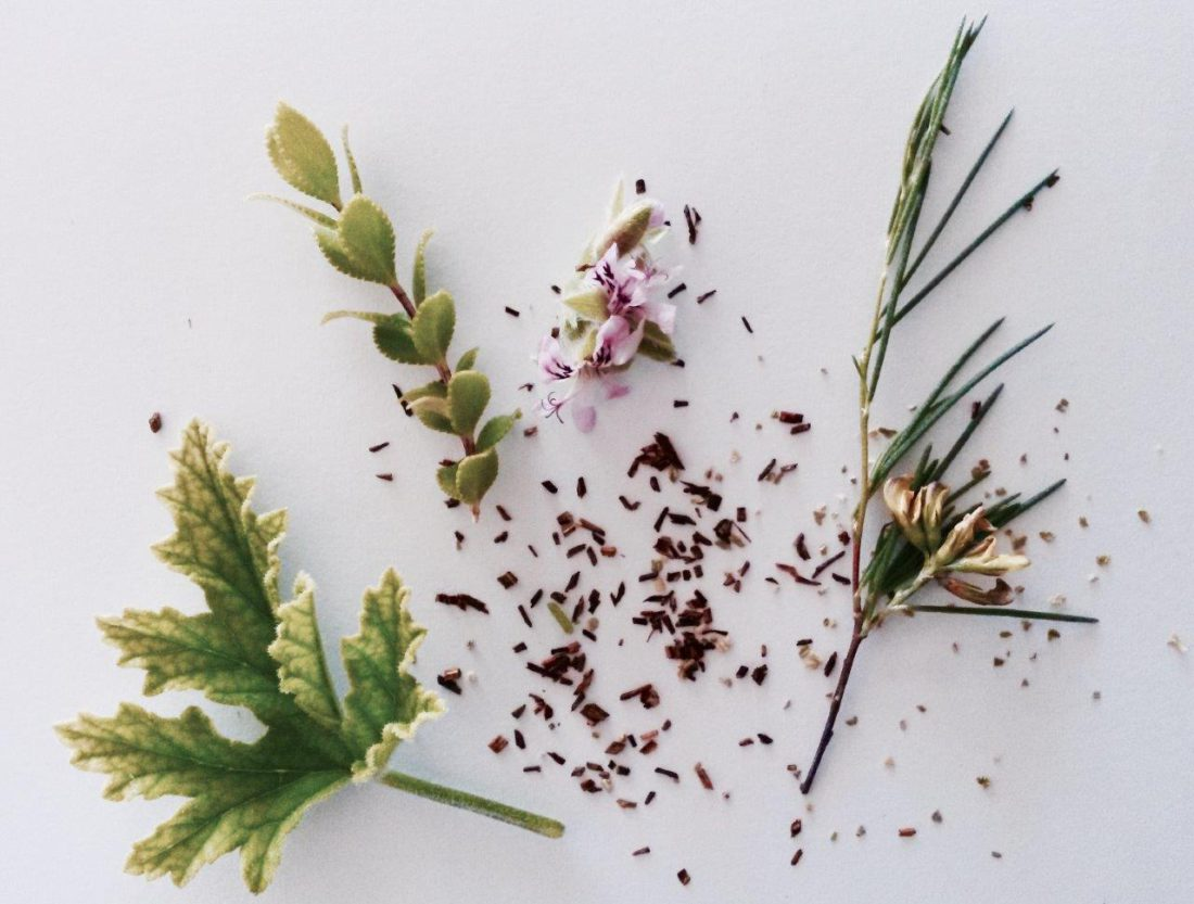 Fynbos Teas_Rose-scented geranium, Round-leafed Buchu, Rooibos